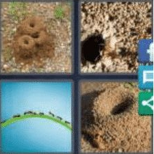 4 PICS 1 WORD ANSWERS 7 LETTERS anthill