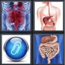 4 PICS 1 WORD ANSWERS 8 LETTERS appendix