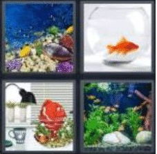 4 PICS 1 WORD ANSWERS 8 LETTERS aquarium
