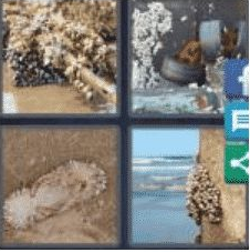 4 PICS 1 WORD ANSWERS 8 LETTERS barnacle