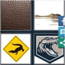 4 PICS 1 WORD ANSWERS 9 LETTERS alligator