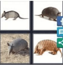 4 PICS 1 WORD ANSWERS 9 LETTERS armabillo