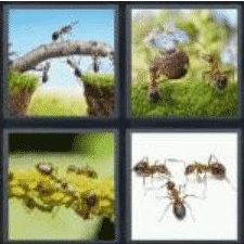 4 Pics 1 Word 4 Letter Answer ants