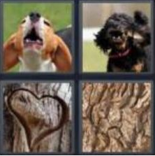 4 Pics 1 Word 4 Letter Answer bark