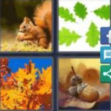 4 Pics 1 Word 5 Letter Answer acorn