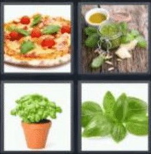 4 Pics 1 Word 5 Letter Answer basil