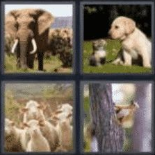 4 Pics 1 Word 6 Letter Answer animal