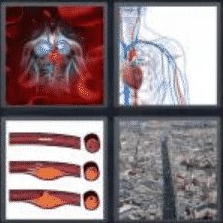 4 Pics 1 Word 6 Letter Answer artery