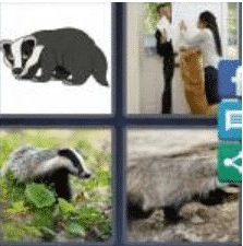 4 Pics 1 Word 6 Letter Answer badger