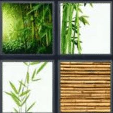 4 Pics 1 Word 6 Letter Answer bamboo
