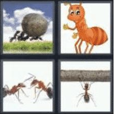 4 pics 1 word 3 letter ant