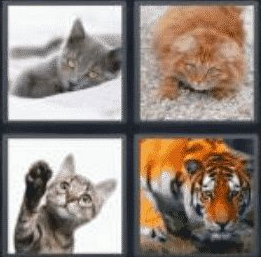 4 pics 1 word 3 letter cat