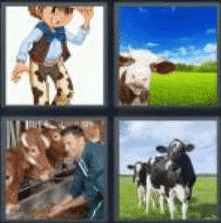 4 pics 1 word 3 letter cow