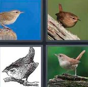 4 Pics 1 Word Level 1 Answers
