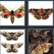 4 Pics 1 Word Level 101 Answers
