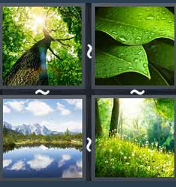 4 Pics 1 Word Level 1457 Answers