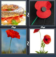 4 Pics 1 Word Level 1507 Answers