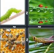 4 Pics 1 Word Level 3037 Answers