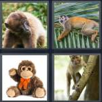 4 Pics 1 Word Level 4321 Answers