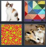 4 Pics 1 Word Level 4373 Answers