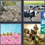 4 Pics 1 Word Level 4423 Answers