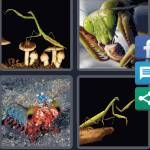 4 Pics 1 Word Level 4598 Answers