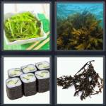 4 Pics 1 Word Level 4613 Answers