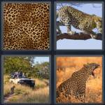 4 Pics 1 Word Level 4680 Answers