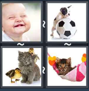 4 Pics 1 Word Level 1851 Answers