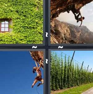 4 Pics 1 Word Level 2353 Answers