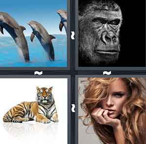 4 Pics 1 Word Level 2783 Answers