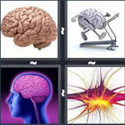 4 Pics 1 Word Level 3219 Answers