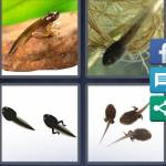 4 Pics 1 Word Level 4855 Answers