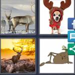 4 Pics 1 Word Level 4866 Answers
