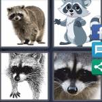 4 Pics 1 Word Level 4932 Answers