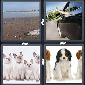 4 Pics 1 Word Level 501 Answers