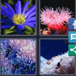 4 Pics 1 Word Level 5053 Answers
