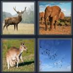 4 Pics 1 Word Level 5121 Answers