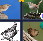 4 Pics 1 Word level 973 Answers 2021