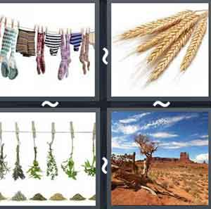 4 Pics 1 word Level 1056 Answers