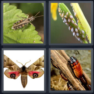 4 Pics 1 word Level 1175 Answers