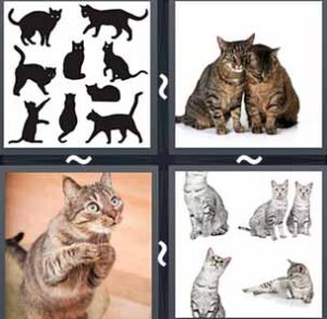 4 Pics 1 word Level 1178 Answers