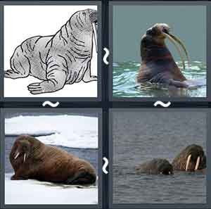 4 Pics 1 word Level 1233 Answers
