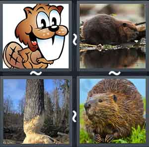 4 Pics 1 word Level 1242 Answers
