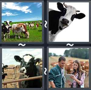 4 Pics 1 word Level 1295 Answers
