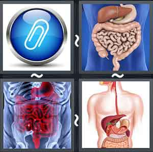 4 Pics 1 word Level 1302 Answers