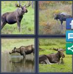 4 Pics 1 Word Level 4079 Answers