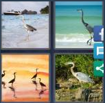 4 Pics 1 Word Level 4085 Answers