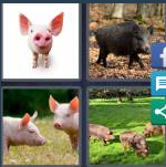 4 Pics 1 Word Level 4112 Answers