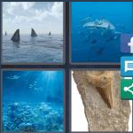 4 Pics 1 Word Level 4145 Answers